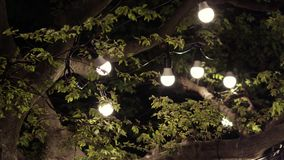 A garland of light bulbs on a tree in the evening. Romantic setting. Fireflies fly around light bulbs at night stock footage