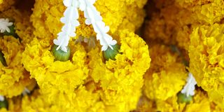 Garland of marigold flower Stock Images