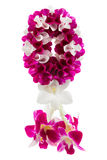 Garland orchid Royalty Free Stock Image