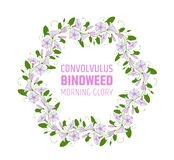 Garland with pink and white bindweed flowers. Wedding element for design wreath morning-glory. convolvulus blossom. Pattern. vector Royalty Free Stock Photo