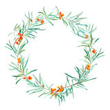 Garland with sea buckthorn. Royalty Free Stock Photo