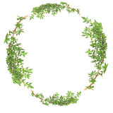Garland of Thyme Royalty Free Stock Photo