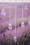 Garland with vases in shape of a light bulbs in a lavender field Royalty Free Stock Images