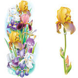 Garlands of Iris flowers royalty free stock images