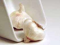 Garlic. Bulbs Stock Photo