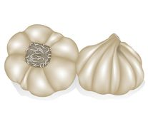 Garlic. Vector image of a head of garlic Royalty Free Stock Photography
