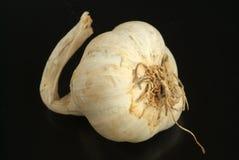 Garlic Royalty Free Stock Images