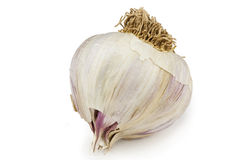 Garlic. A head of garlic isolated against a white background royalty free stock photos