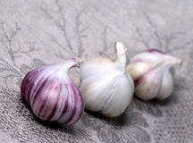 Garlic. Vegetables. Garlic on grey serviette Stock Photography