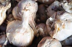 Garlic. It is a closeup of garlics Royalty Free Stock Photography