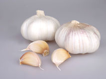 Garlic. In the white backgroud Stock Image