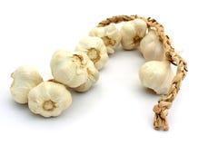 Garlic. Bulbs on white background Stock Photos