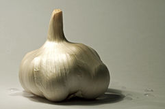 Garlic. Also known as Allium sativum. Used for both culinary and medicinal purposes royalty free stock photo