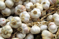 Garlic. Pile of harvested garlic bulbs Royalty Free Stock Image
