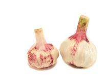 Garlic. On a white background Stock Images