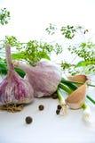 Garlic. Cloves and bulbs of fresh garlic Stock Photos