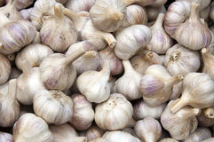 Free Garlic Stock Photo - 15685620