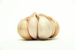 Garlic. Bulb isolated on white background royalty free stock photos