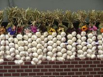 Garlic. Strings of garlic bulbs in front of a brick wall stock photos