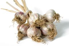 Garlic. Bunch isolated on white background Stock Photos