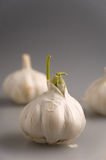 Garlic 2. Set of three pieces of garlic on the grey mat with only one piece in focus. Vertical Stock Photography