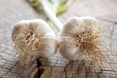 Garlic. Two whole garlics on a rustic wooden table. Allium sativum Royalty Free Stock Photo