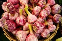 Garlic. Fresh Garlic on a market in france Stock Photo