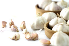 Garlic Royalty Free Stock Photos