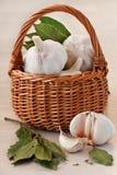 Garlic. Stock Photography