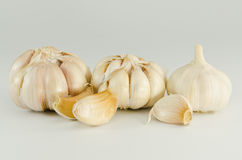 Garlic. Is a  strong smell herb Royalty Free Stock Photography