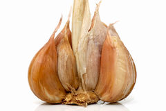 Garlic. Closeup view showing cloves of garlic on a white background Royalty Free Stock Photography