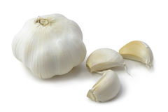 Garlic. White garlic on white background stock photo