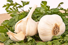 Garlic. Fresh white garlic and parsley on wooden plate Royalty Free Stock Photo