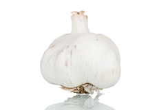 Garlic. Over a reflective white background Stock Images