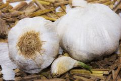 Garlic. Whole garlic in food, seasoning , cooking , traditional Stock Photos
