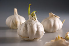 Garlic 3. Set of three pieces of garlic on the grey mat with only one piece in focus Stock Photography