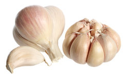 Free Garlic Royalty Free Stock Images - 3400719