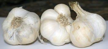 garlic Imagem de Stock Royalty Free