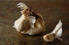 Garlic. Still life with garlic stock images