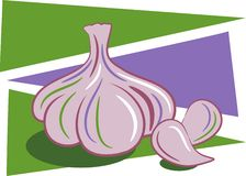 Garlic vector illustration