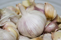 garlic Imagem de Stock Royalty Free