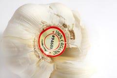 Garlic. Macro of a whole bulb of organic garlic royalty free stock image