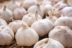 Garlic1 Photo stock