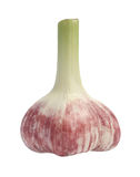 Garlic. Fresh garlic on a white background Stock Photos