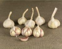 Garlic2 Lizenzfreie Stockfotografie