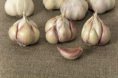 Garlic3 Stockbilder