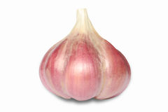 Garlic. One garlic on the white Stock Photography