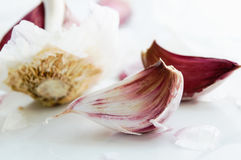 Garlic. Still life with garlic in white background Stock Photos