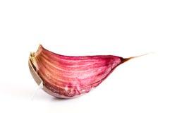 Garlic. One garlic on white background Stock Photos
