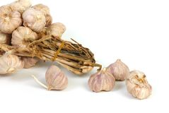 Garlic. Isolated cooking herbs and condiments stock images